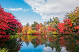7-Day Pass – Autumn Country Itinerary