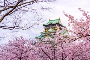 7-Day Pass – Cherry Blossoms Delights Itinerary