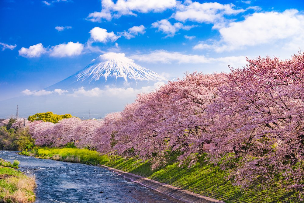 Mt. Fuji, Japan and river in Spring.