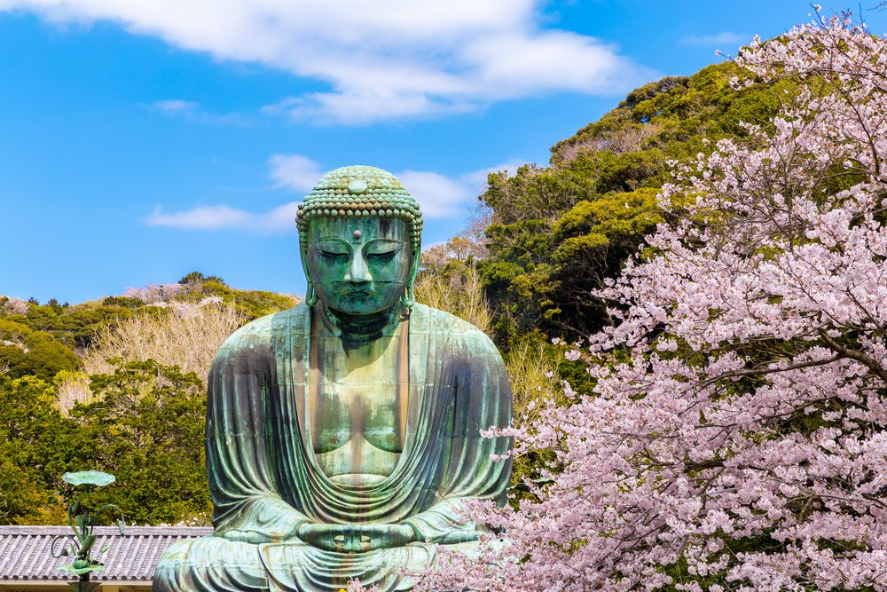the Great Buddha.The foreground is cherry blossoms Located in Kamakura