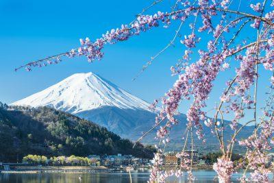 Mt Fuji and Cherry Blossom at lake Kawaguchiko