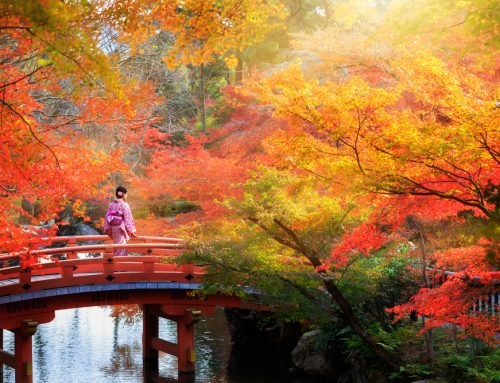 Why Japan Is A Great Country To Travel Solo