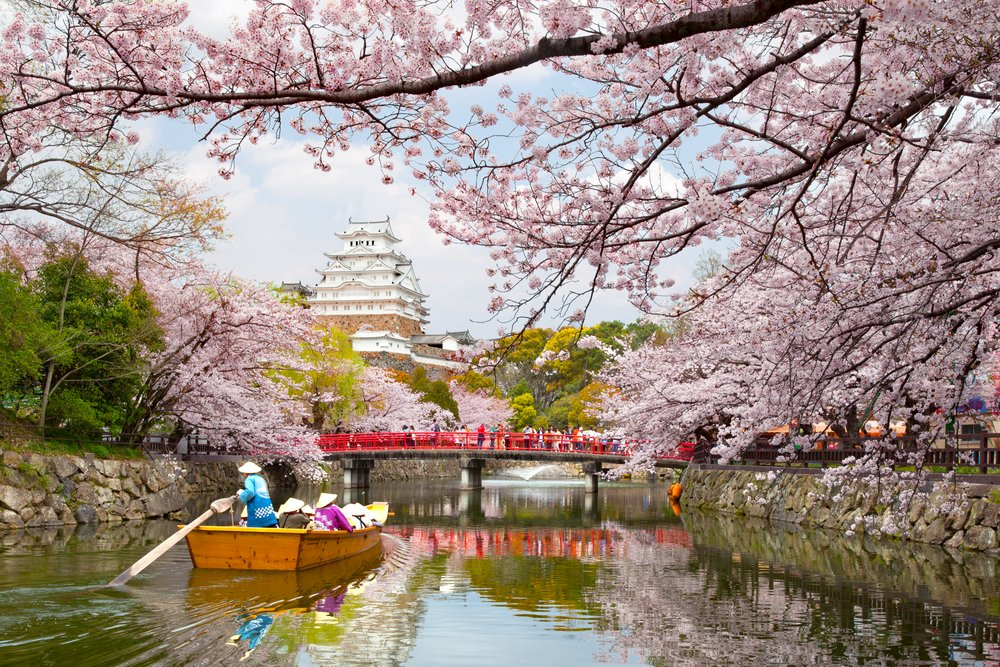 Himeji Castle Cherrry Blossoms Viewing Festiva