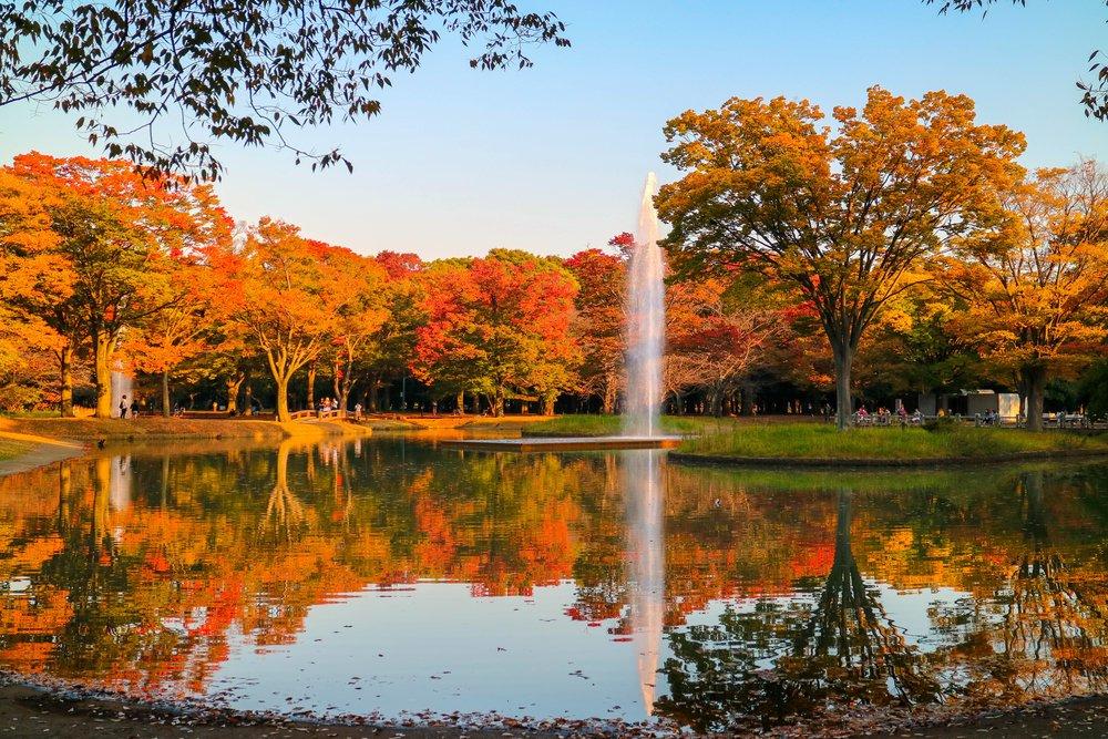 Warm shades of dusk and autumn leaves Yoyogi Park