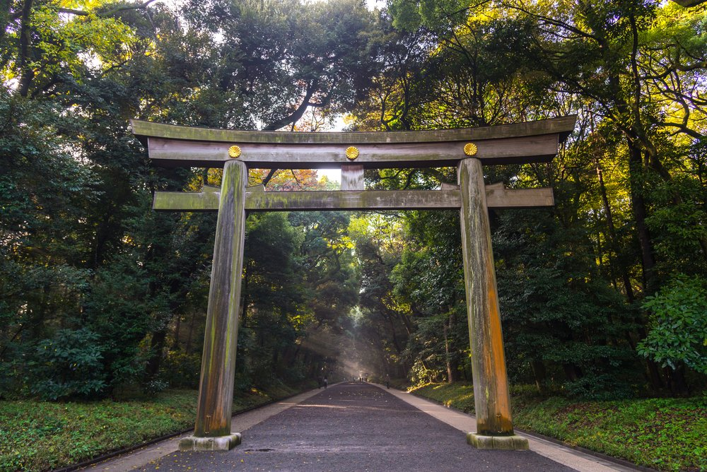 Torii of Meiji Jingu Shrine