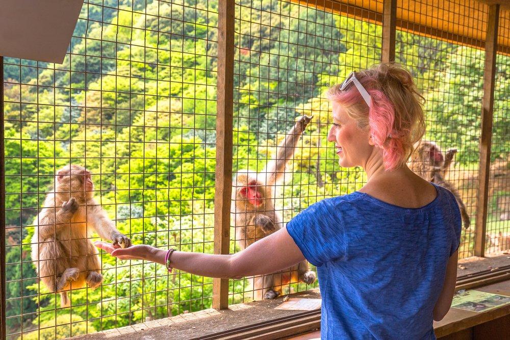 popular Iwatayama Monkey Park in Arashiyama, Kyoto, Japan. Tourist enjoys interaction with monkey